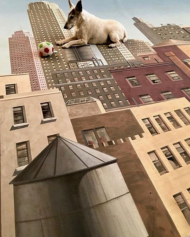 From archives of ' painting maintenance days ' sweet memories of ' Ollie ' the Fox Terrier ' ball gazing Sphinx on the rooftops of Gotham City , btw, I didn't paint this cityscape, this is typical ' scenic artists formula, circa 63' , I purchased a few of